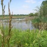 mudford_wetland