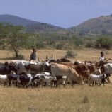 Tanzania_IFAD_Robert Grossman