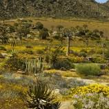 Namaqualand Goegap