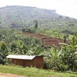 Terraced hillslopes in Uganda. Photo by Seth Shames/EcoAgriculture Partners.