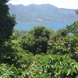 Lake Atitlan Coffee Farm - LGross