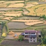 Rice_Paddies_Homestead_Sthapit
