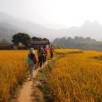 ICRAF Researchers in Vietnam_AlbaSarayPerez