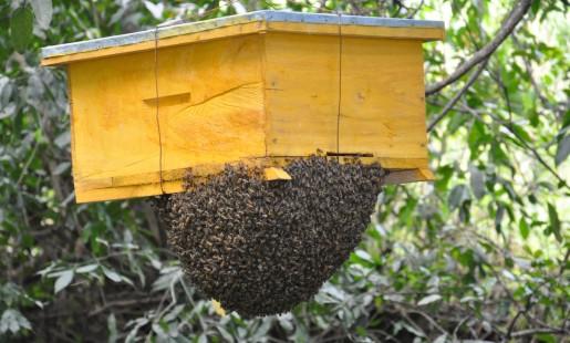 Beekeeping new (J. Recha ERMCSD)
