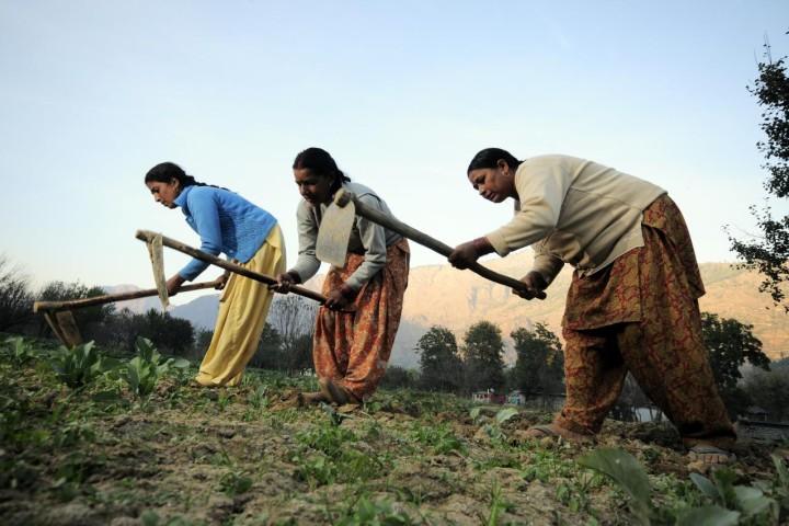Women farmers at work in their vegetable plots near Kullu town, Himachal Pradesh, India. Photo by Neil Palmer (CIAT).