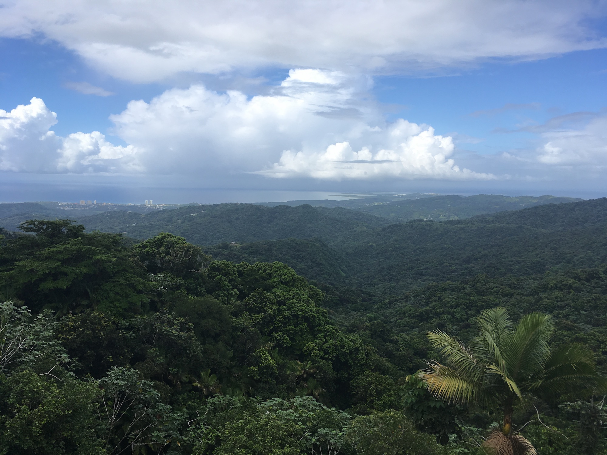 Forests of Puerto Rico